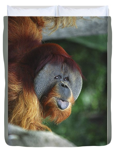 Old Man Of The Forest Duvet Cover