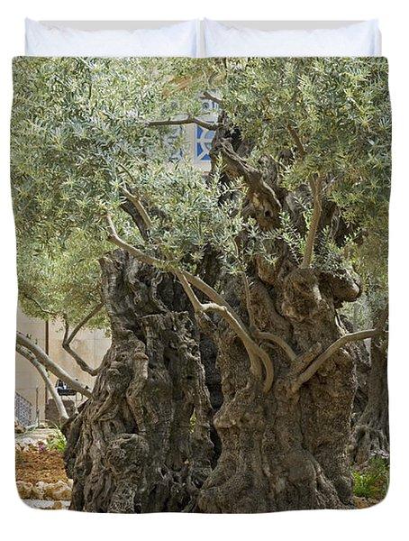 Old Olive Trees Gethsemane Jerusalem Duvet Cover