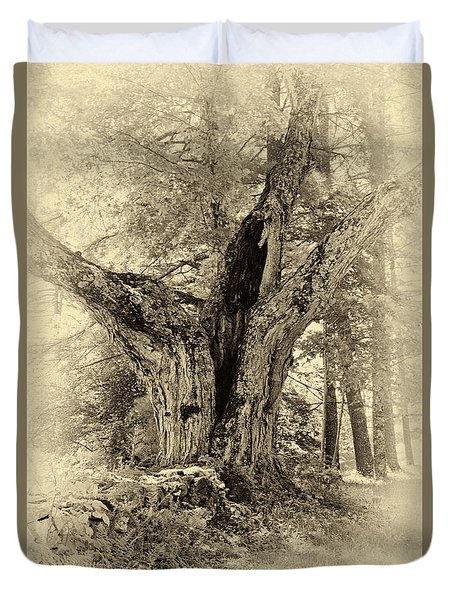 Old Tree  Duvet Cover by Betty  Pauwels