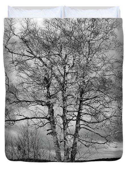 Old White Birch Duvet Cover