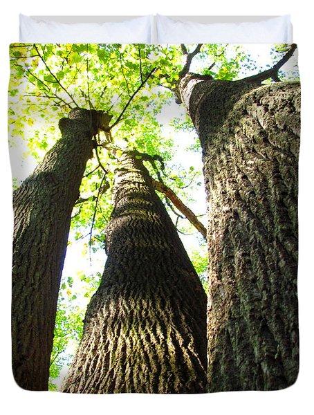 Oldgrowth Tulip Tree Duvet Cover
