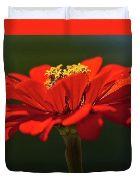 Duvet Cover featuring the photograph Orange Aster-a Bee's Eye View by Onyonet  Photo Studios