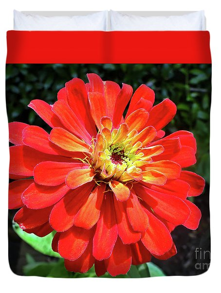 Duvet Cover featuring the photograph Orange Burst Zinnia by Sue Melvin