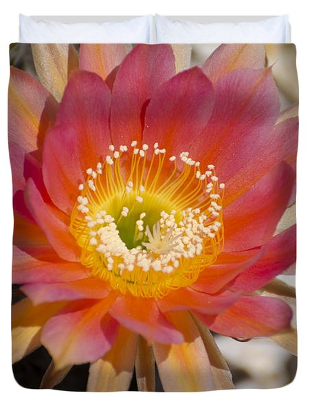 Orange Cactus Flower Duvet Cover by Jim And Emily Bush