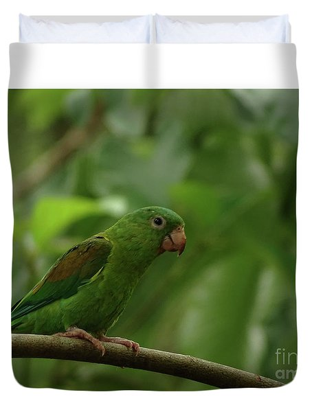 Orange-chinned Parakeet  Duvet Cover