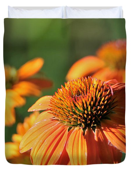Orange Cone Flowers In Morning Light Duvet Cover