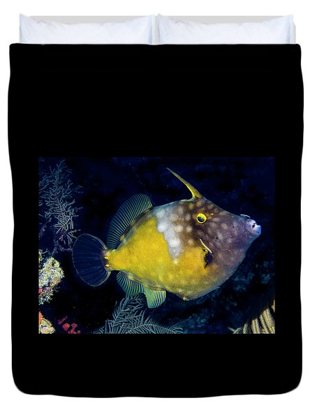 Duvet Cover featuring the photograph Orange Filefish by Jean Noren