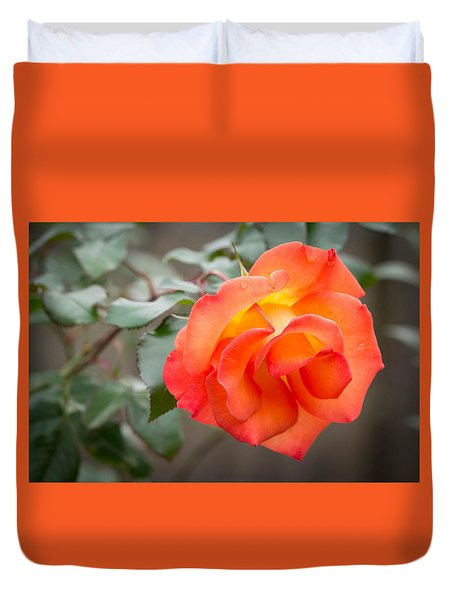 Orange Flower In The Sun Duvet Cover