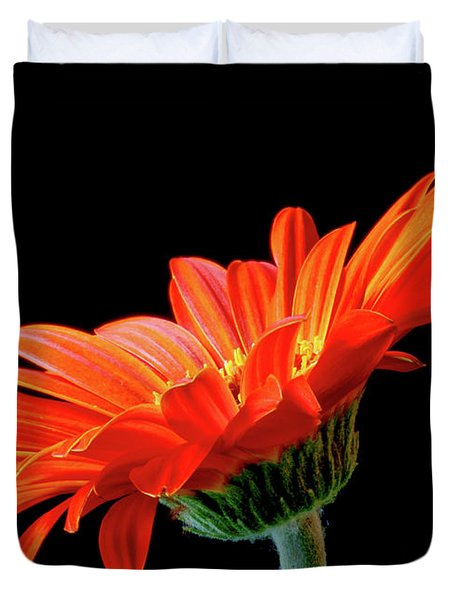 Orange Gerbera On Black Duvet Cover