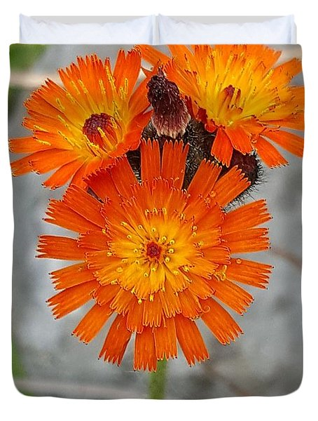 Orange Hawkweed Duvet Cover