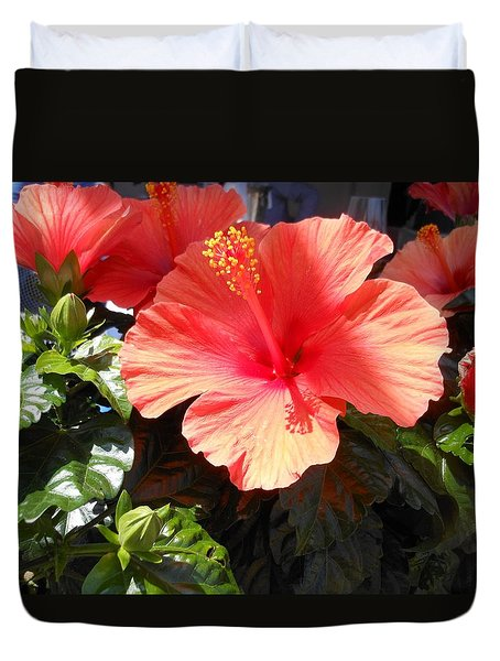 Orange Hibiscus Duvet Cover by Kay Gilley