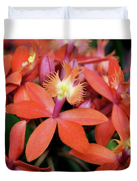 Orange Pink Epidendrum Orchid Duvet Cover
