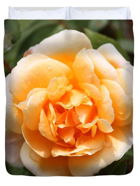 Orange Rose Square Duvet Cover by Carol Groenen