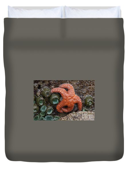 Orange Starfish And Anemonies Duvet Cover
