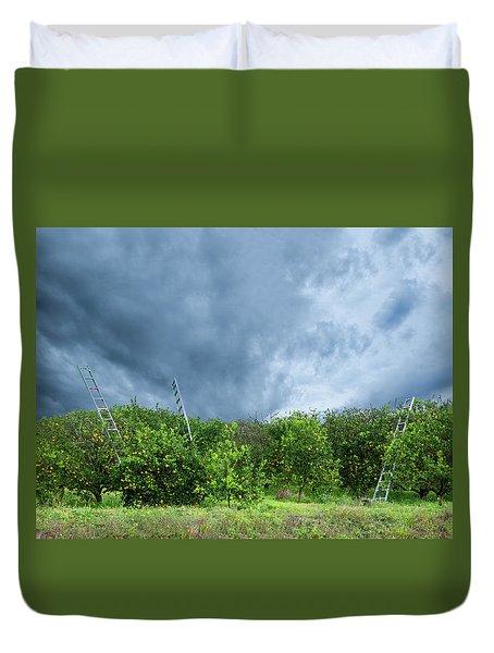 Orange Tree Duvet Cover by Carolyn Dalessandro