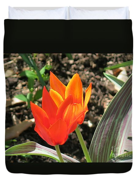 Orange Tulips Duvet Cover by Rod Ismay