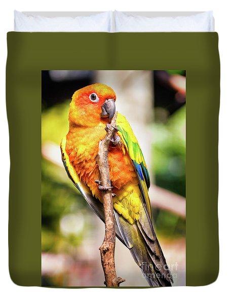 Orange Yellow Parakeet Duvet Cover by Stephanie Hayes