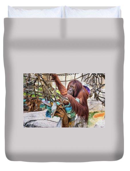 Orangutan In Rope Net Duvet Cover by Stephanie Hayes