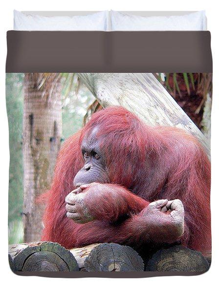 Orangutang Contemplating Duvet Cover by Rosalie Scanlon