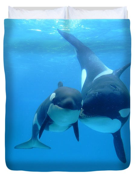 Orca Orcinus Orca Mother And Newborn Duvet Cover by Hiroya Minakuchi