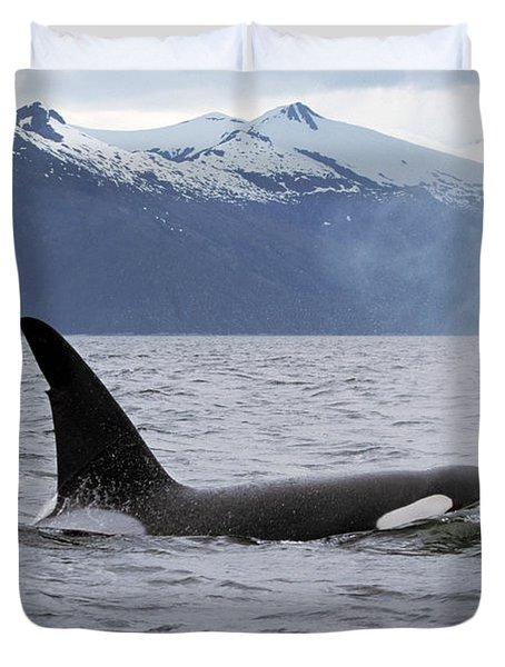 Orca Orcinus Orca Surfacing Duvet Cover by Konrad Wothe