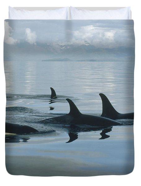 Orca Pod Johnstone Strait Canada Duvet Cover