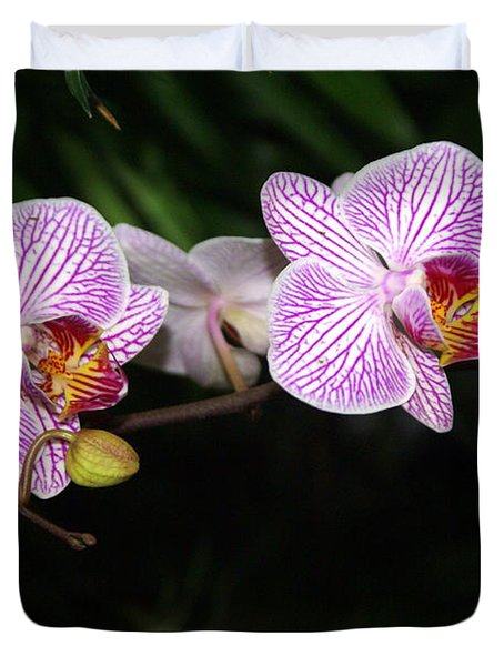 Orchid 2 Duvet Cover by Marty Koch
