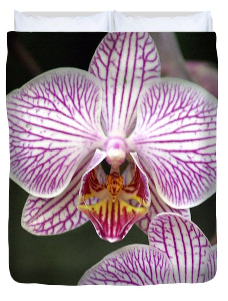 Orchid 22 Duvet Cover by Marty Koch