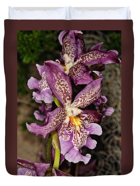 Orchid 347 Duvet Cover