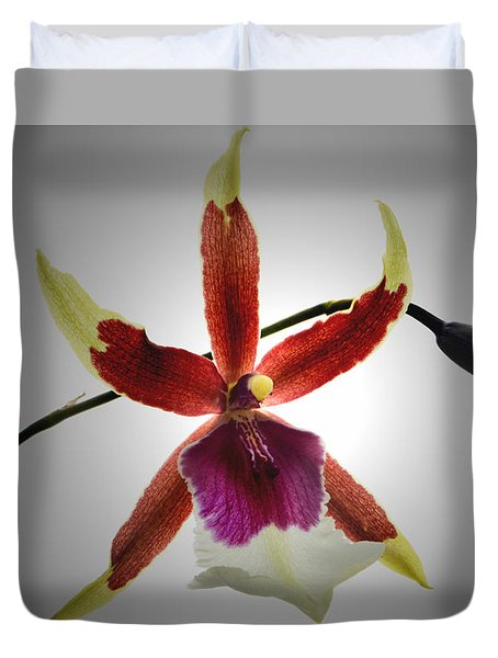Orchid Cambria. Duvet Cover by Terence Davis