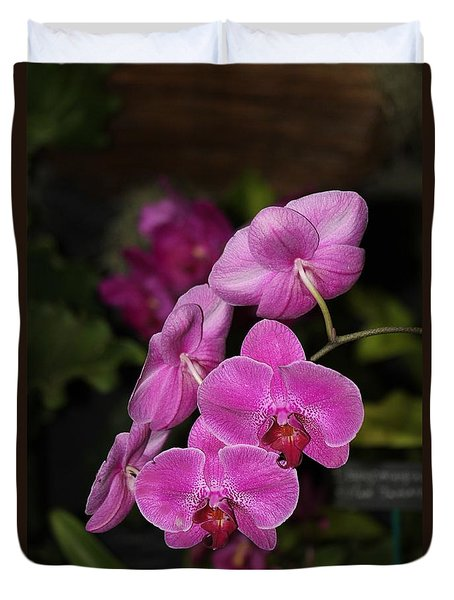 Orchids Alicia Duvet Cover by The Art of Alice Terrill