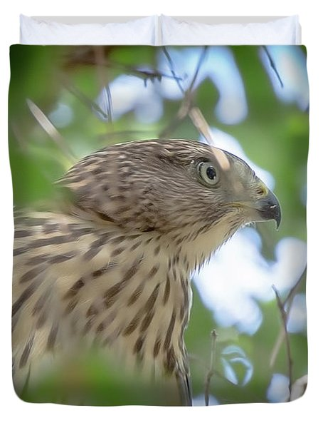 Red-shouldered Hawk Fledgling 1 Duvet Cover