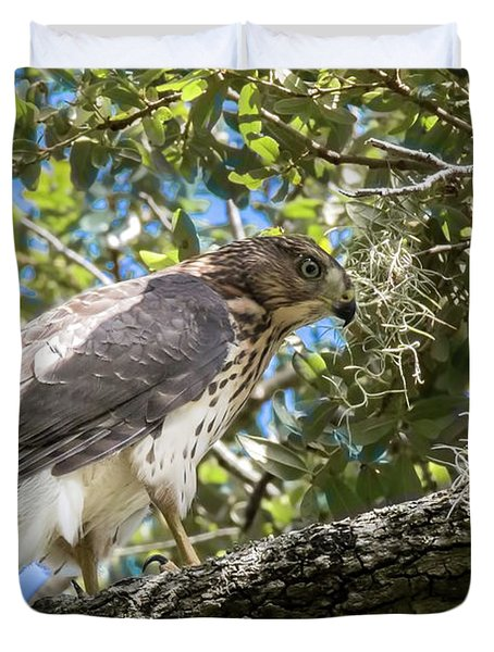 Red-shouldered Hawk Fledgling - 4 Duvet Cover