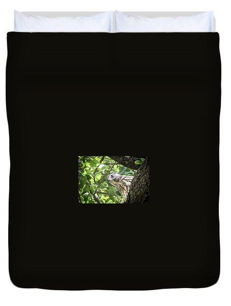 Red-shouldered Hawk Fledgling - 5 Duvet Cover
