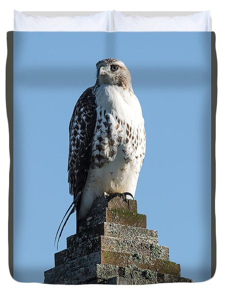 Red Shoulder Hawk On A Post Duvet Cover by Paul Freidlund