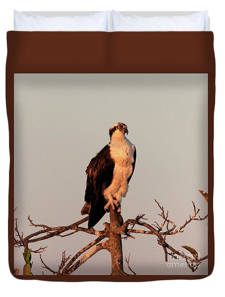 Osprey On The Caloosahatchee River In Florida Duvet Cover by Louise Heusinkveld