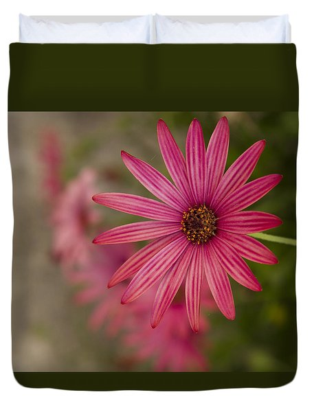 Duvet Cover featuring the photograph Osteospermum The Cape Daisy by Shirley Mitchell