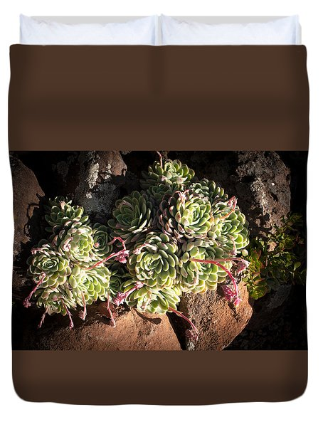 Out Door Succulents Duvet Cover by Catherine Lau