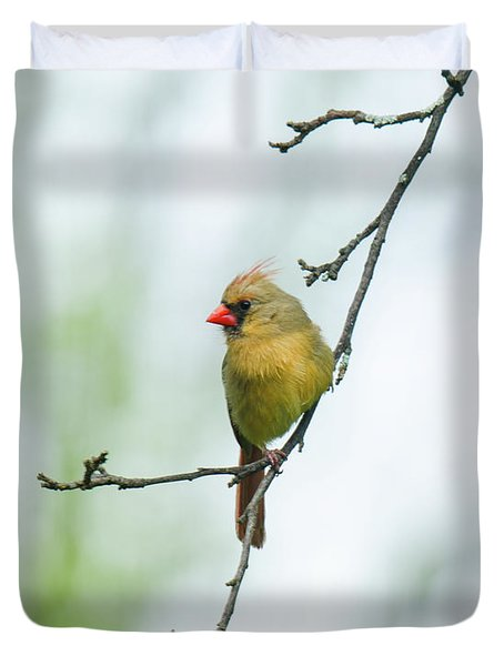 Out On A Limb 2 Duvet Cover