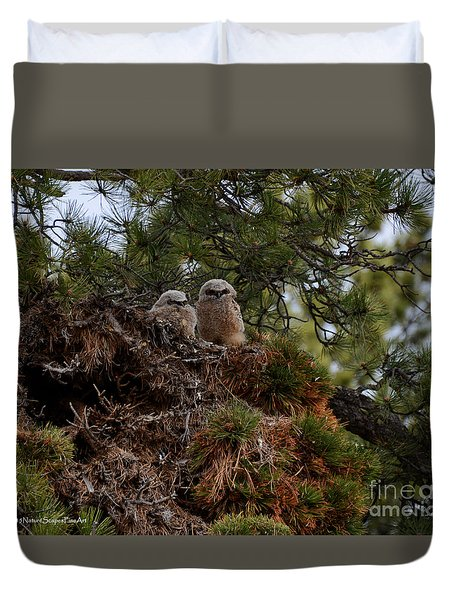 Owl Babies Rocky Mountain National Park  Duvet Cover by Nature Scapes Fine Art