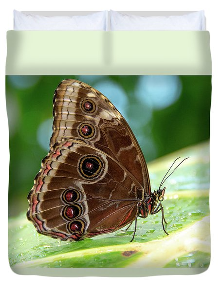 Owl Butterfly Duvet Cover