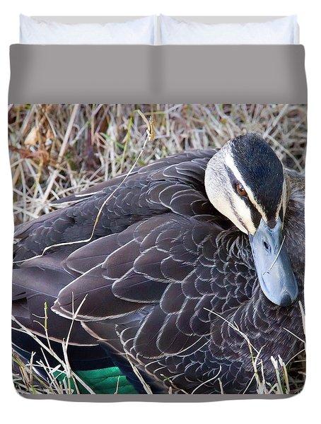 Duvet Cover featuring the photograph Pacific Black Duck Mother by Miroslava Jurcik