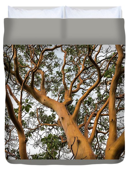 Pacific Madrone Trees Duvet Cover