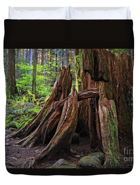 Pacific Rainforest Old And New Duvet Cover