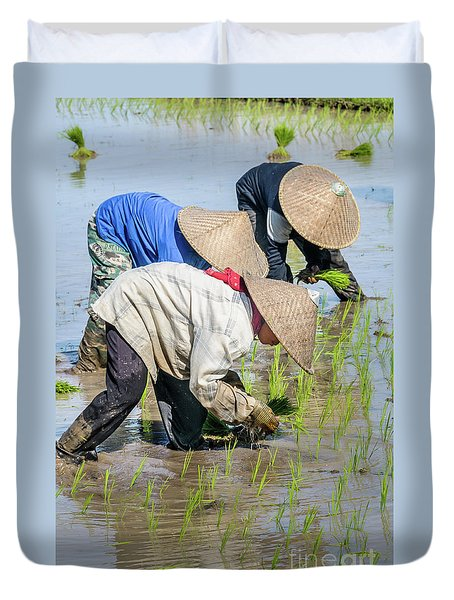 Paddy Field 2 Duvet Cover by Werner Padarin
