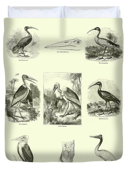 Page From The Pictorial Museum Of Animated Nature  Duvet Cover by English School
