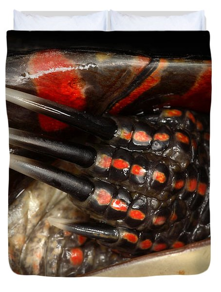 Painted Turtle Claws Duvet Cover