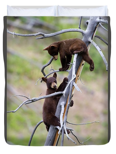 Pair Of Bear Cubs In A Tree Duvet Cover