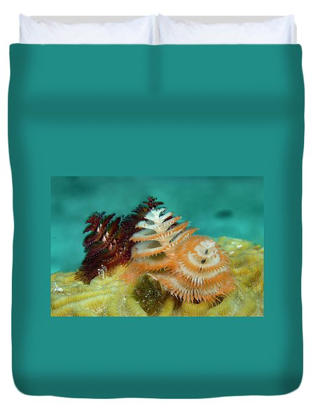 Duvet Cover featuring the photograph Pair Of Christmas Tree Worms by Jean Noren