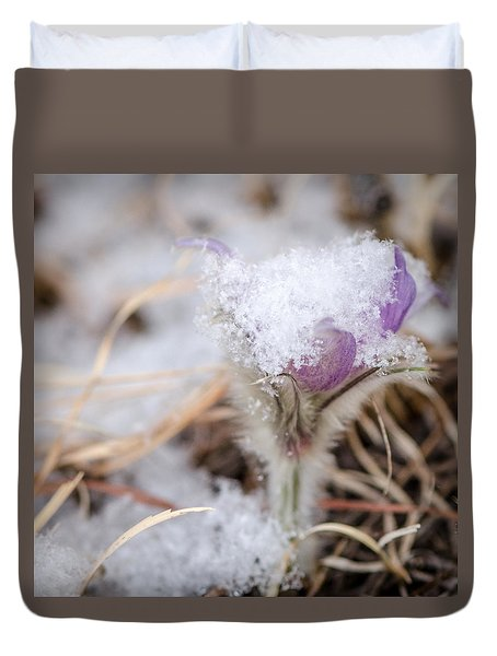 Pasqueflower In The Snow Duvet Cover